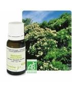 Aceite Árbol del Té Biológico 10ml